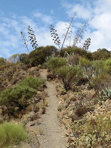 Gran Canaria_029