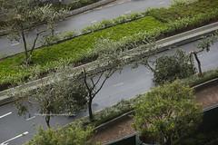 Typhoon Hato, Tseung Kwan O, Hong Kong (Daryl Chapman Photography) Tags: hongkong china sar canon 5d mkiii tko tseungkwano storm down broken damage tree typhoon hato 70200l f28 signal t10