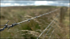 Please keep out (G. Postlethwaite esq.) Tags: dof fujx100t fujix100t staffordshiremoorlands barbedwire beyondbokeh bokeh depthoffield fence grass moorlands photoborder selectivefocus wind
