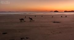 Cape Hillsborough (dundox1) Tags: kangaroos island sunrise cape hillsbrough mackay queensland trees ngc