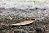 AY6A0698 (fcruse) Tags: cruse crusefoto 2017 surferslodgeopen surfsm surfing actionsport canon5dmarkiv surf wavesurfing höst toröstenstrand torö vågsurfing stockholm sweden se