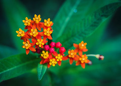 Flower (rickmcnelly) Tags: flower gx8 rollei carl zeiss planar 50mm18 rolleicarlzeissplanar50mm18