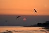 ALBA DI UN NUOVO GIORNO. (Salvatore Lo Faro) Tags: alba cielo mare gabbiani sole rosso onde mattino rodi puglia italia lidodelsole salvatore lofaro nikon 7200