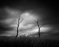 II (ghostedout) Tags: ancient natural landscape storm sombre nature twisted outdoors mono outdoor tree old suffolk dead dark countryside reeds monochrome gloomy infrared bright cloud dramatic monotone black edgy ir coast oak white suffolkcoastaldistrict england unitedkingdom gb sky grass field forest
