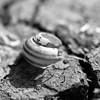 Broken Home (Benedict Todd) Tags: id11 bw olympus hp5 om4 800 earth soil dry cracks broken ilford shell snail
