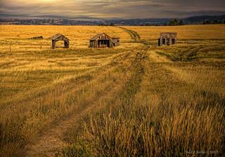 On Golden Fields