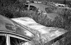 junkyard (Bernie Vander Wal) Tags: olympustrip35 ilforddelta100 hc110 standdeveloped