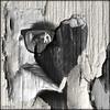 untitled (piktorio) Tags: berlin germany peelingpaint projection photomontage oneeye eye piktorio bw monochrome surface textures layers wall fence wood peeling paint dry