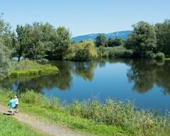Schleienloch Pond, Hard, Vorarlberg, Austria (jag9889) Tags: 2017 20170807 at aut austria bodensee bregenz europe hard hardat lake lakeconstance landscape oesterreich outdoor pedestrian republic see tributary vorarlberg wasser water jag9889