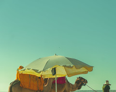 Camel Journey (saadbelachemi) Tags: beach summer camel sky colors retro vintage morocco journey landscape photography