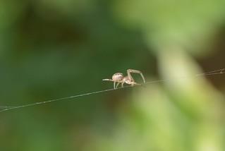 Web Wanderer!