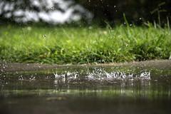 Rainy Day (shannon_blueswf) Tags: puddle reflection grass rainy rain rainyday fun mirror water nikon nikond3300 nikonphotography nature