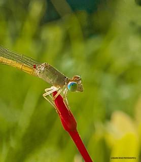 #macro #dragonfly #butterfly #purple #macro #flower #macrophotography #photooftheday #picoftheday #bestoftheday #photo #photography #canon #canonphotography #canon_photos #canonphotos #canonuk #mycanon #instagood #beautiful #huffpostgram #ig_exquisite #mo