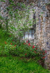 Window in a wall (FotoGrazio) Tags: botany quiet stonewall waynegrazio waynesgrazio art basement botanical composition flowers fotograzio grass green greengrass nature peaceful plant scenic stilllife texture tranquil wall window