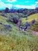 paisaje5 (yajat54) Tags: nogales sonora picnic terrenos cabañas cabins nature naturaleza