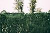 DSCF3418 (chemlon1979) Tags: fujifil s5pro sigma 30mm vsco trees agfa vista prague
