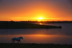 O cavalo do capataz (Eduardo Amorim) Tags: cavalos caballos horses chevaux cavalli pferde caballo horse cheval cavallo pferd crioulo criollo crioulos criollos cavalocrioulo cavaloscrioulos caballocriollo caballoscriollos pampa campanha pelotas costadoce riograndedosul brésil brasil sudamérica südamerika suramérica américadosul southamerica amériquedusud americameridionale américadelsur americadelsud cavalo 馬 حصان 马 лошадь ঘোড়া 말 סוס ม้า häst hest hevonen άλογο brazil eduardoamorim pôrdosol poente entardecer poniente atardecer sunset tramonto sonnenuntergang coucherdesoleil crepúsculo anoitecer açude barrage dam damm aguada diga