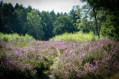 Glaner Heide - Dötlingen