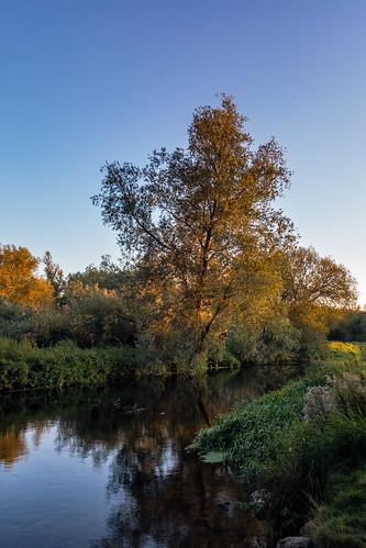 The River Stour, near Canterbury