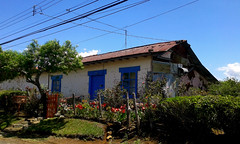 Casa de Adobe por mi ruta de caminata/ Adobe house, by my hiking route (vantcj1) Tags: edificio arquitectura patrimonio rural vivienda adobe jardín vegetación naturaleza puerta cielo cableado flor colorido caminata
