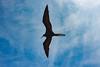 2011-Curacao-0184.jpg (Casal Partiu Oficial) Tags: curacao willemstad passaro bird curaçao curação cw