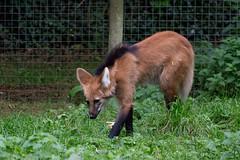 Paignton Zoo Part 2 (Rich Walker75) Tags: paignton devon zoo animals