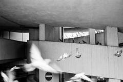 (Feininger's Cat (Thanks for 1.3 million views!)) Tags: meinfilmlab leica film ilforddelta100 bessar3m summaritm50mmf24 50mmffequiv bs blackandwhite analog fullframe leicasummaritm12450 summarit summarit50 50mm leicam rangefinder messsucher