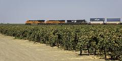 Two out of Three (lennycarl08) Tags: bnsf ns railroad trains stocktonsub burlingtonnorthernsantafe burlingtonnorthernsantaferailroad centralvalley california