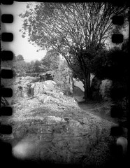 pete-P913 (pete-analogue-photos petevideos) Tags: kodak bantam 828 with tmax 400 old film self rolled for sprockets