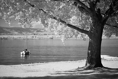 September Afternoon at the Lake. (NVenot) Tags: lake water black white highcontrast monochrome infrared r72 filter fuji fujifilm fujinon park tree sail boat reservoir pond grass infra red