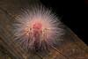 Oruga (Wilmer Quiceno) Tags: oruga gusano macro envigado eos70d macrofotografía insecto
