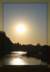 2017 Sydney: A Very Windy Spring Afternoon in Centennial Park #53 (dominotic) Tags: sydney nsw australia newsouthwales 2017 centennialpark publicpark tree green bluesky goldenglow shadow sun circle nature springsunset