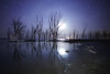 Moonlight in the dead place (karinavera) Tags: longexposure night photography ilcea7m2 moonlight epecuen tree abandoned buenosaires dead sky stars