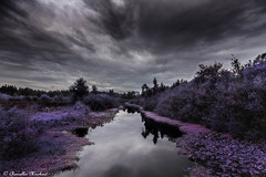 Mercer Slough Nature Park on a cloudy day (Endless Reflection Photography) Tags: bellevuewashington bellevue mercerslough mercersloughpark visitbellevue infrared bellevueinfrared infraredphotography bellevuewetland bellevuehistory historyofbellevue bellevuereflection bellevuerain seattle seattleinfrared bellevuecollection downtownbellevue mercersloughnaturepark mercersloughenvironmentaleducationcenter eastsideheritagecenter seattleseastside bellevueblueberryfarm mercersloughblueberryfarm bellevuelinklightrail endlessreflectionphotography ereflectionphotos cmerchant1 streetmeetwa moody moodyphotography bellevuemoody bellevuefall whotelbellevue bellevueskyline lakewashington westbellevue enatai mercerisland lincolnsquareexpansion dark pluviophile seattlephotographer bellevuephotographer nature pacificnorthwest