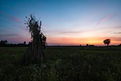 Aulakowszczyzna wianek  (1 of 1) (Stach_Trach) Tags: aulakowszczyzna korycin sokólszczyzna podlasie zachód słońca sunset windmill wiatrak