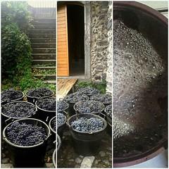 Photo (fischettiwine) Tags: tenuta moscamento today we start harvest 2017 wines vine etnadoc sicily nerellomascalese nerellocappuccio alberello century oldvines winemaker