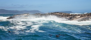 Seals.... (not THE Robben Island)