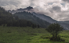 Kleinwalsertal (Netsrak) Tags: europa europe berg berge gebirge kleinwalsertal nebel baum bäume wald