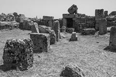 IMG_8276 (SalvoGulisanoFotografo) Tags: selinunte sicily greektemple