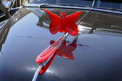 1949 Chevrolet HoodArt (bballchico) Tags: 1949 chevrolet deluxe lowrider bomb westcoastkustomscruisinnationals carshow hoodart hoodornament