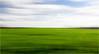 Fixpunkt am Horizont (Beppe Rijs) Tags: deutschland germany schleswigholstein schlei wolken wolkendecke frühling spring landschaft landscape natur nature field feld gras horizont horizon grün green clouds farbig colored line linie rural ländlich pastell fertile fruchtbar freshly frisch color farbe acker knick blue blau