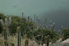 Arraial do Cabo_Praia do Forno (mutanttales) Tags: sea mar brasil riodejaneiro praia playa beach arraialdocabo praiadoforno canon6d love