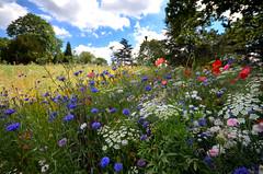 DSC_2337 (Resery) Tags: london hornimanmuseum parks gardens