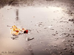 Reflection- feuille morte (BaK-Studio) Tags: reflection feuille geneva sol ground glace hiver eau orange jardin anglais canon nicepic