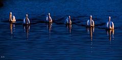 Wind to Calm (beachpeepsrus) Tags: pelican pond california color coast dawn huntingtonbeachcalifornia