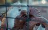 Ram (aris paizanos-mavrakis) Tags: ram horns sheep olympus 50mm zuiko agfa film analog animal planet animalplanet bokeh greece portorafti mutedcolors softtones