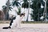Cat (noku.my) Tags: cat kucing outdoor black white eye nikon photography besut terengganu malaysia