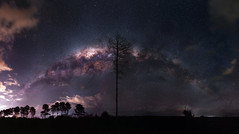 Milky Way over Yeal, Western Australia (inefekt69) Tags: milky way gnangara pine plantation tree lone westernaustralia australia great rift panorama stitched msice landscape wide astrophotography astronomy stars galaxy milkyway galactic core space night nightphotography nikon 50mm d5500 dslr long exposure perth southern southernhemisphere cosmos cosmology outdoor sky landscapeastrophotography mosaic hoya redintensifier didymium explore explored