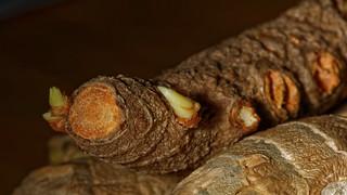 Curcuma / gingembre - Turmeric / Ginger