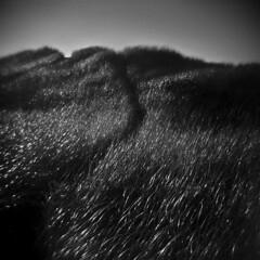 Dune #3 (LowerDarnley) Tags: holga pei princeedwardisland seaview dune dunegrass sand ocean beach maritimes atlantic path dark dunepath
